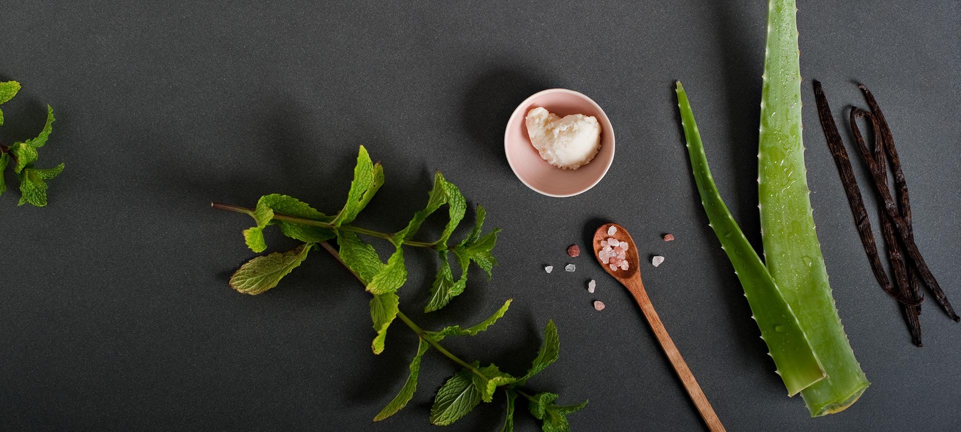 Eucalyptus Mint Benefits Panel Background