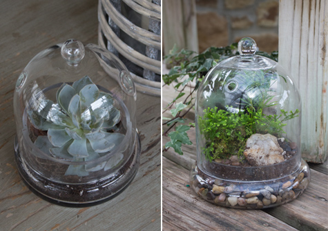Beautiful Terrarium Containers Be Inspired 46 Spruce 46