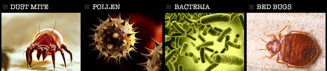 Dust Mites, Pollen, Bacteria, Bed Bugs