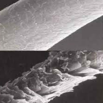 microscopic view of healthy and damaged hair strands