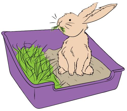 good bunny uses litter box
