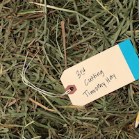 premium 3rd cut timothy hay