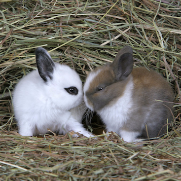 2 bunnies in the hay