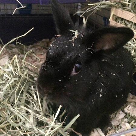 Romeo with hay