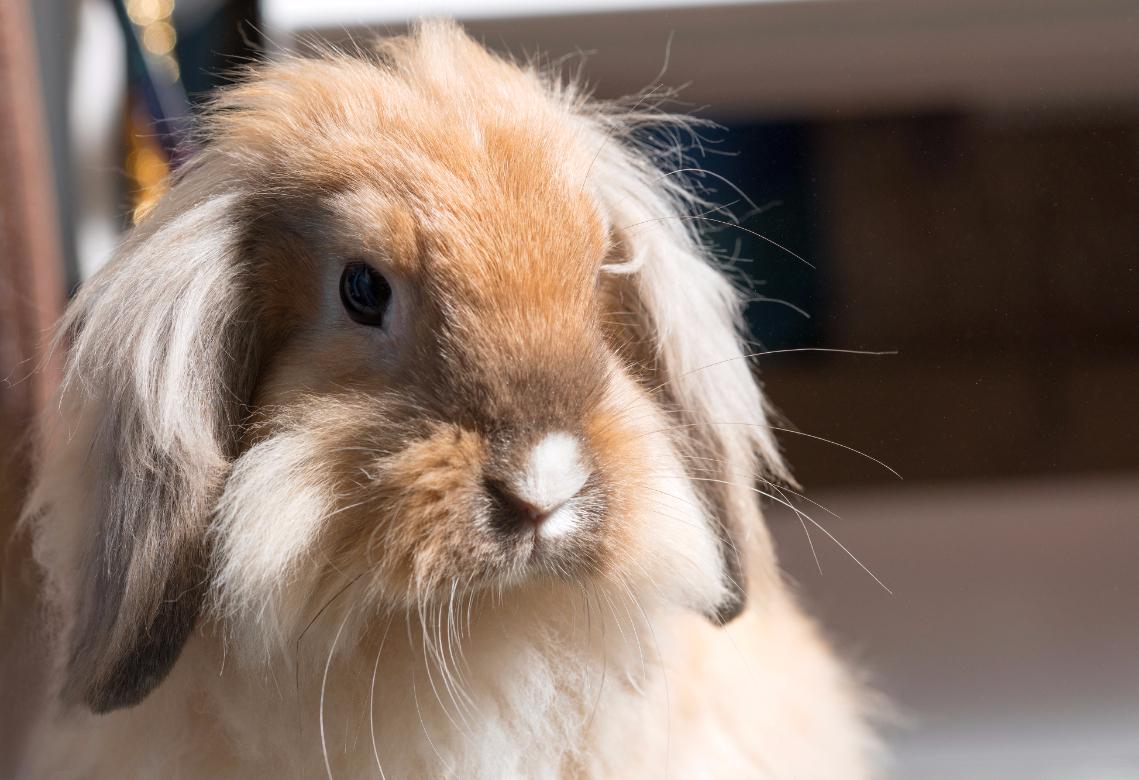 disapproving rabbit