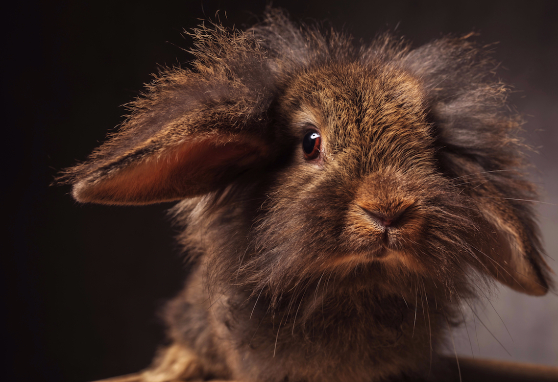 rabbit is judging you