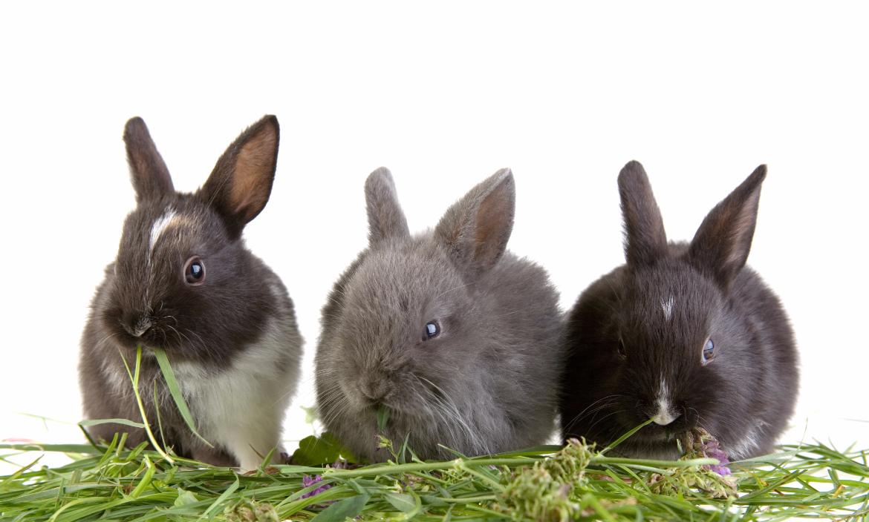 rabbits enjoying fresh hay
