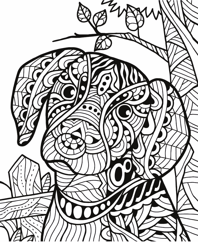Wild Animals Drawing 1