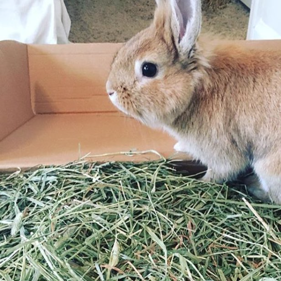 customer rabbit with small pet select hay