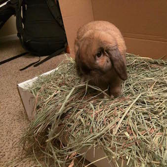bunny loving small pet select hay