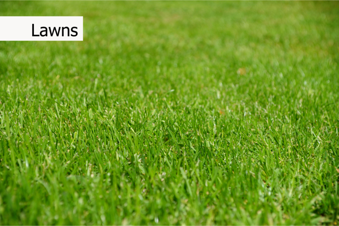 using worm castings for lawn grass