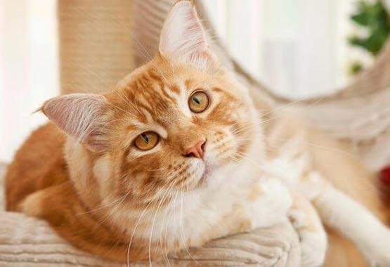 Cat Q&A