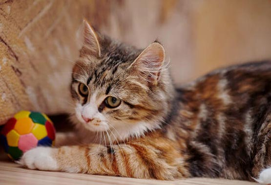 Cat Training and Behavior