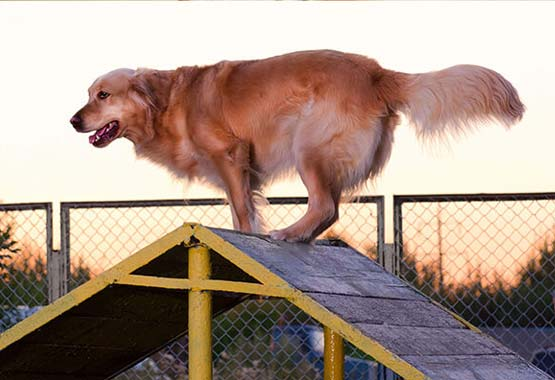 Dog Training and Behavior