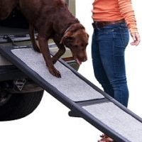 chocolate lab using ramp