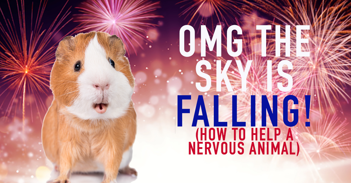 Fireworks are scary for rabbits and guinea pigs
