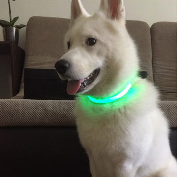 Testimonial dog led collar