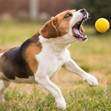 What Are The Benefits of Glucosamine for my Dog?