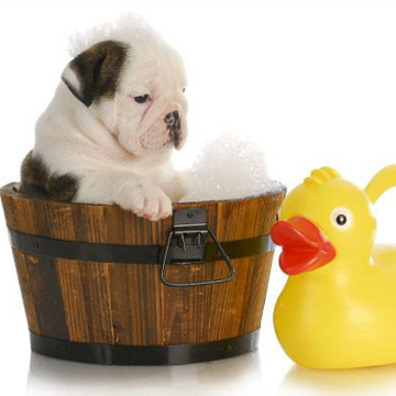 Why Hypoallergenic Shampoo Is Good For Your Dog