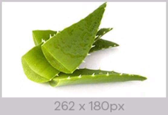 Image Size 262 x 180px