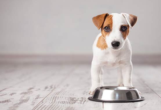 Salmon Oil Dosage For Your Dog