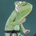 Kameleon Agency – Ecommerce Setup Expert