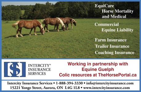 Equicare Horse Mortality And Medical Commercial Equine Liability Farm Insurance