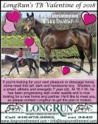LongRun's TB Valentine of 2018