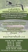 Equine Massage Courses