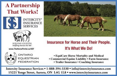 Insurance for Horse and Their People