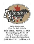 Ashbacher Angus