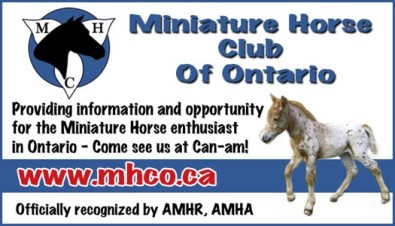 Providing information and opportunity for the Miniature Horse enthusiast in Ontario
