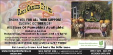 All Sizes Of Pumpkins Available at ROCK GARDEN FARMS