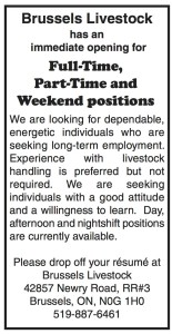 Brussels Livestock Has Immediate Openings