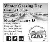 Winter Grazing Day Grazing Options
