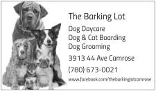 Dog Daycare Dog & Cat Boarding Dog Grooming