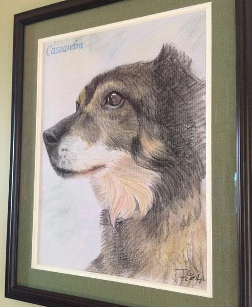 dog portraits - color pencil drawing