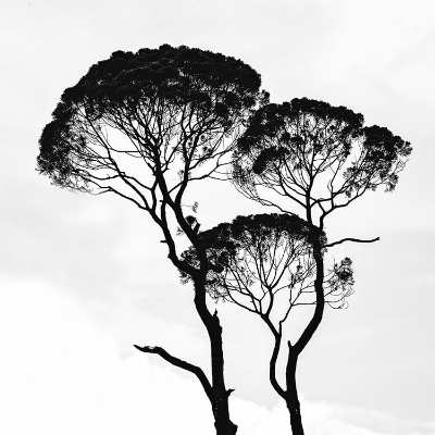 Black  And  White Tree-illustration