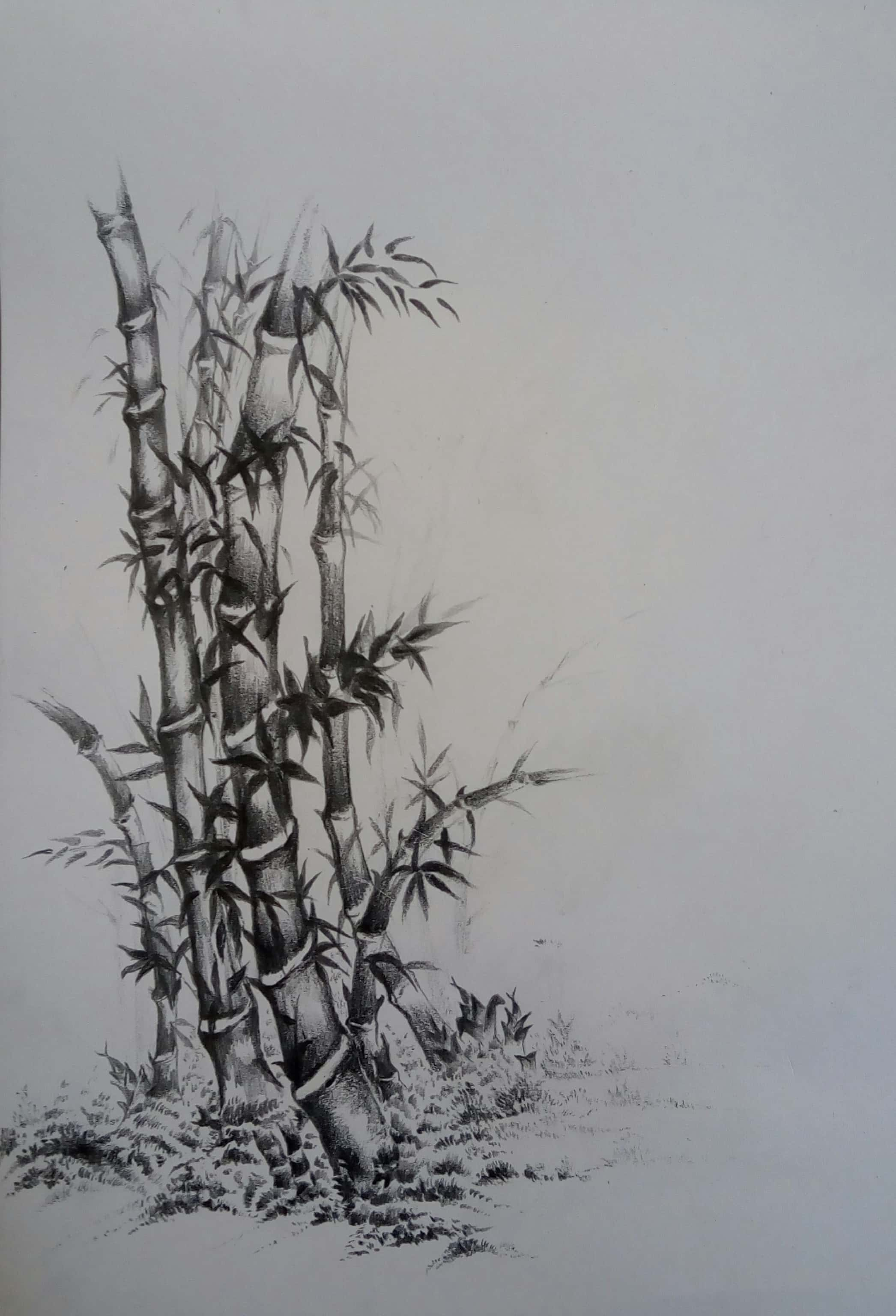 Bamboo Tree-drawing