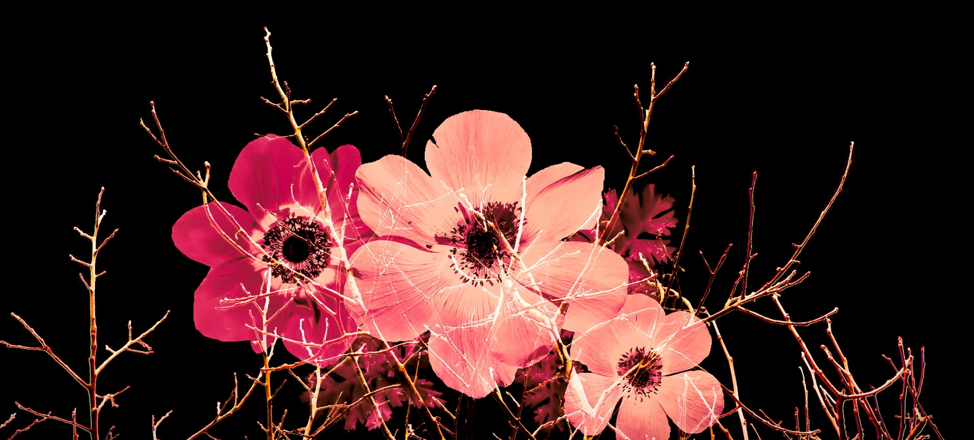 Photo Manipulation With Branches And Anemones-