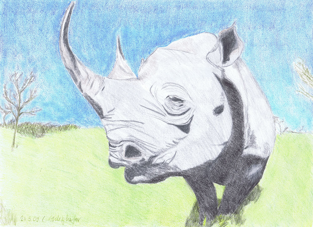 Impressive Rhino-drawing