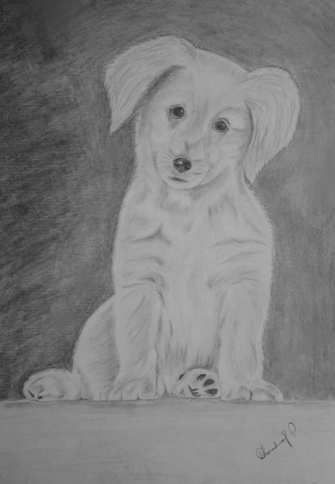 Cute Puppy drawing Showflipper