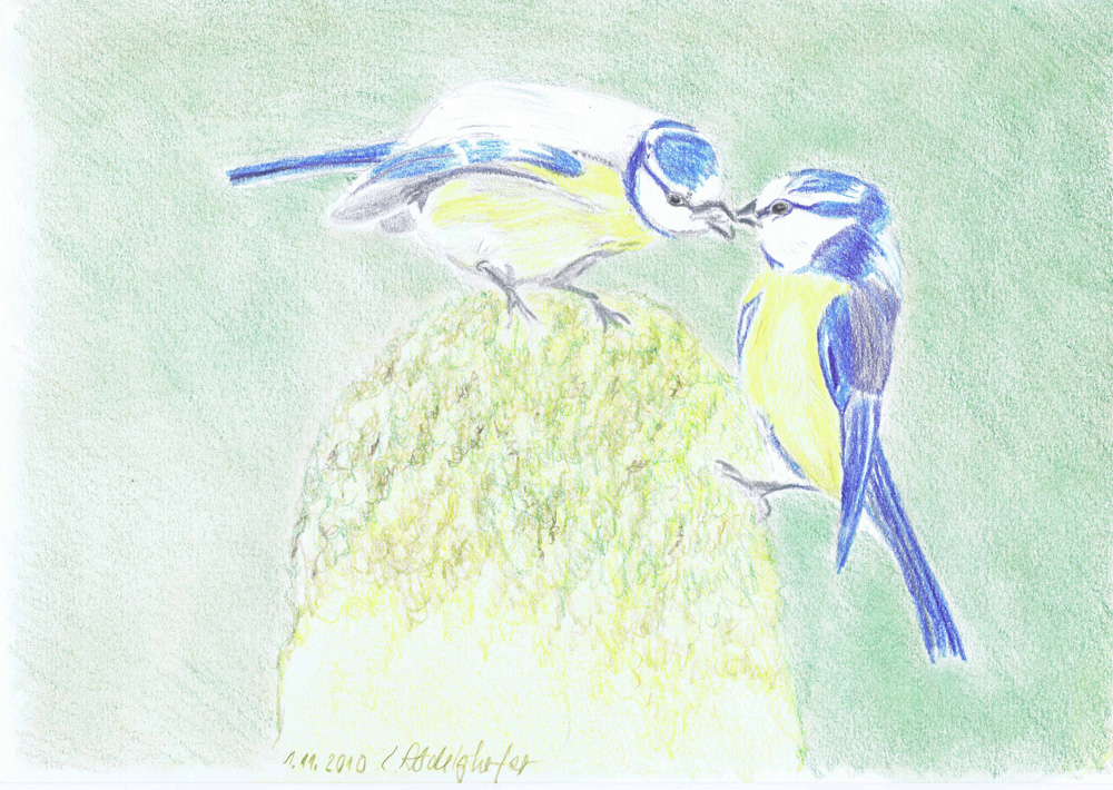 Pair Of Blue Tits-drawing Showflipper