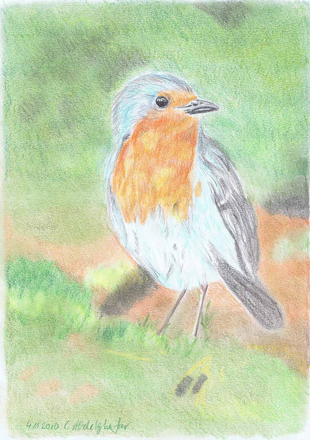 Robin-drawing Showflipper