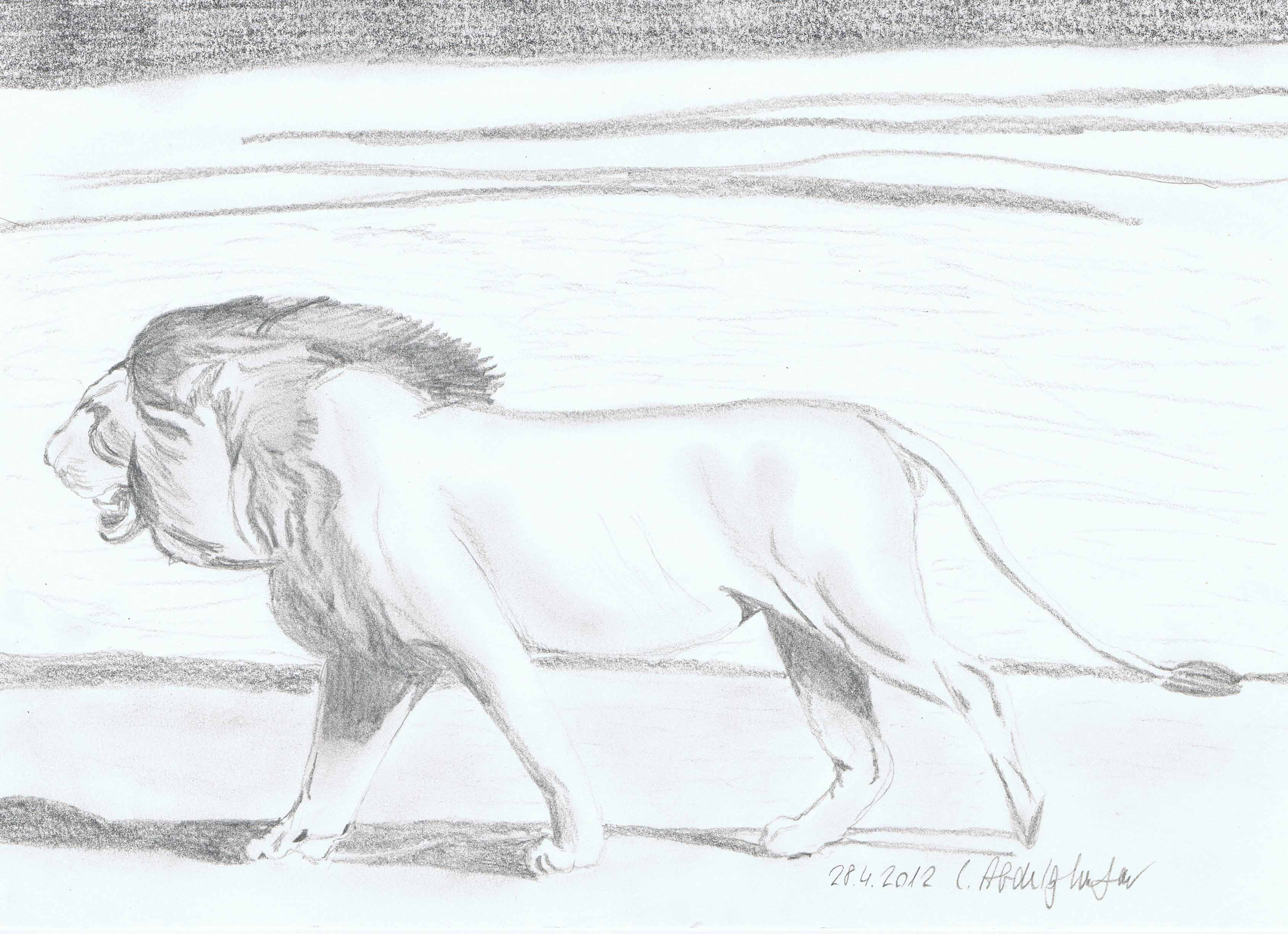 Lion Walking-drawing Showflipper