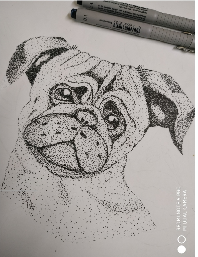 Stippling-drawing Showflipper