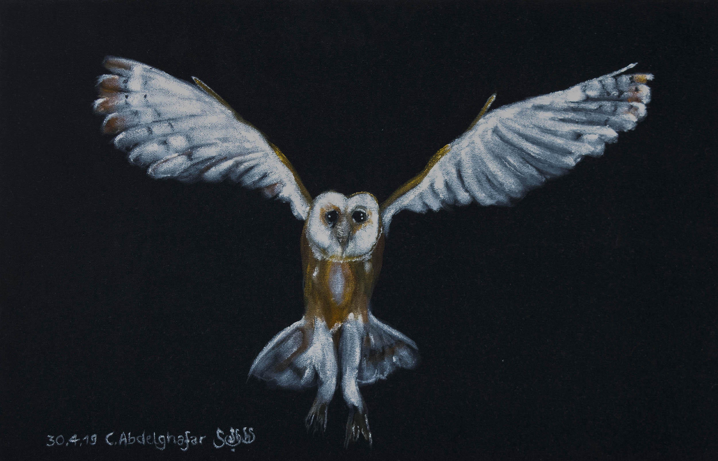 Barn Owl-paintings Showflipper