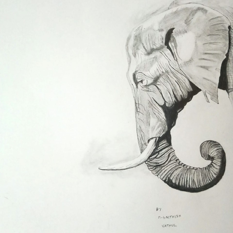 Realistic Drawing Of An Elephant-drawing Showflipper