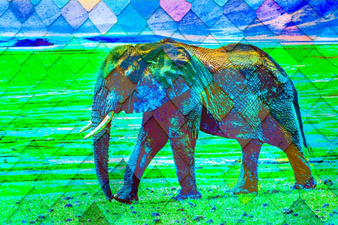 Wonderful Artistic Art Of Elephant Walking- Showflipper
