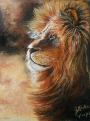 Focus On -paintings Showflipper